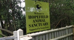 Summer 2012 at Hopefield Animal Sanctuary