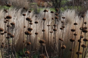 Leave Seedheads for the birds