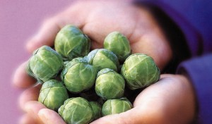 Brussels Sprouts Brilliant Syngenta