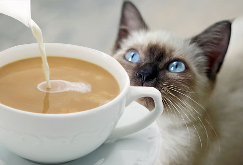 coffee_cat_9