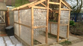 The Eco-friendly Greenhouse at Shenfield High School