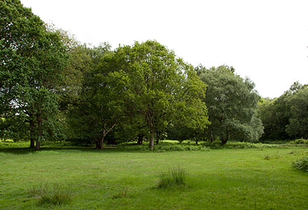 thorndon-park-overview[1]
