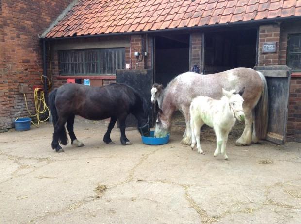 Grace, Bracken, Holly & Jess