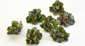 What do you get if you cross a Brussels Sprout & Kale?
