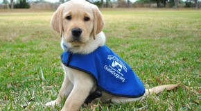 Brenda Weaver – The Guide Dogs Coffee Morning in Shenfield