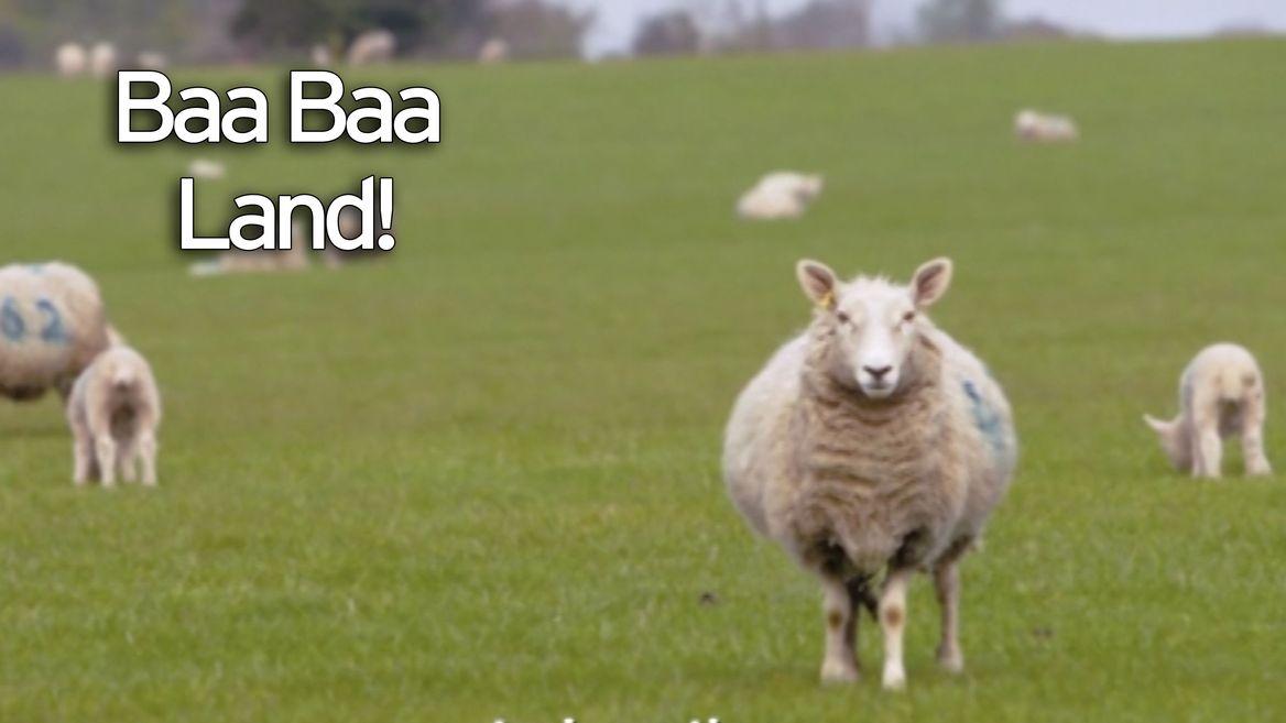 baa-baa-land