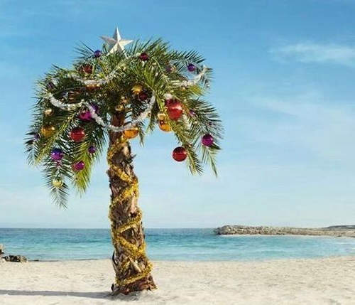 Palm Tree Beach: Boxing Day Special 10 Am -1pm