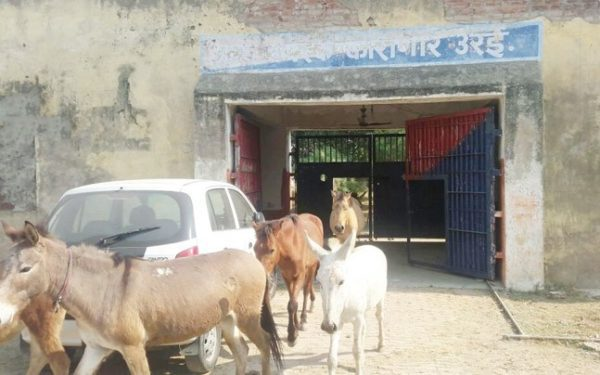 jailed donkeys